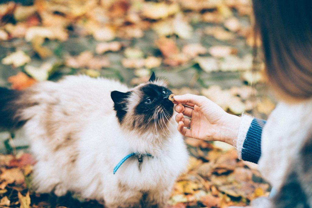Pet Travel Essentials: Vacation Packing List for Dogs and Cats